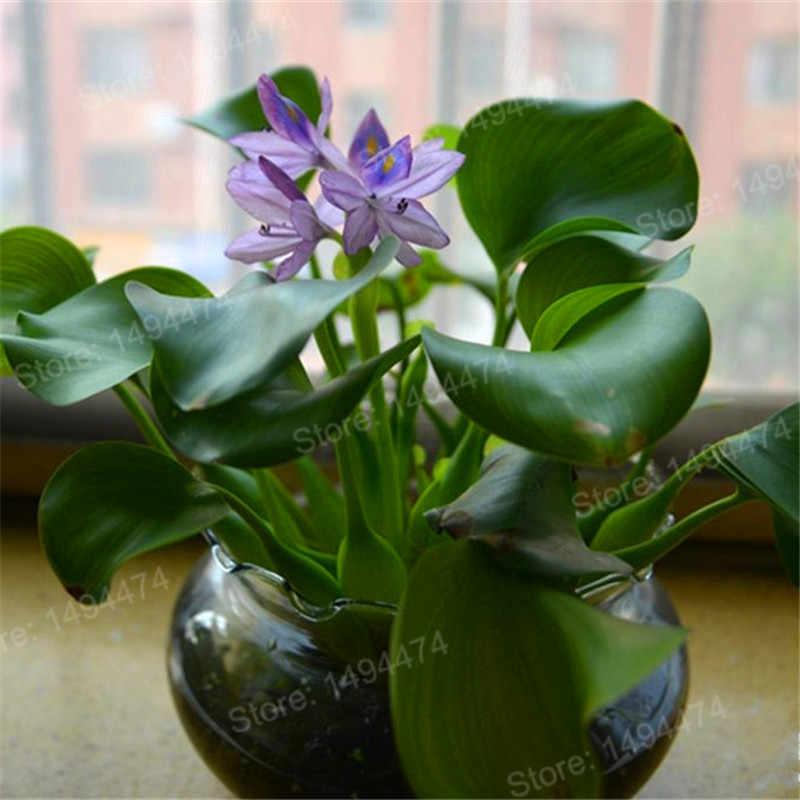 Hot Bán 100 cái/túi Nước Lục Bình flores hoa plante Vườn Pond Flowers Chậu Bonsai bonsai Dễ Dàng Nảy Mầm Thủy Sản Jardim Pla