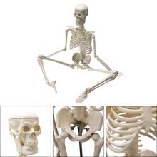 45CM אדם אנטומיים האנטומיה שלד דגם רפואי סיטונאי הקמעונאי פוסטר רפואי ללמוד סיוע האנטומיה אדם שלד דגם