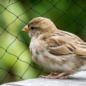 واسعة x 5 M إضافي قوي مكافحة الطيور المعاوضة حديقة التخصيص لا تشابك و قابلة لإعادة الاستخدام حماية دائمة ضد الطيور الغزلان