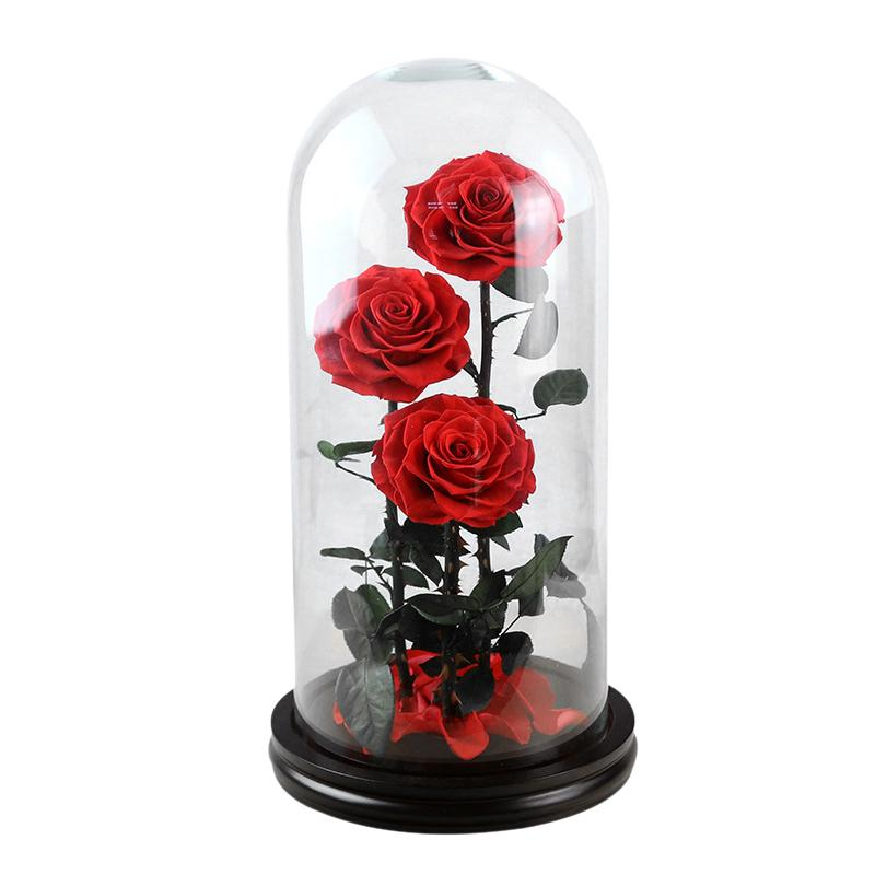 Preserved Fresh Flower Dried Flower Innovative Unique Multi Color Red Rose Glass Cover Deco For Birthday Valentine's Day