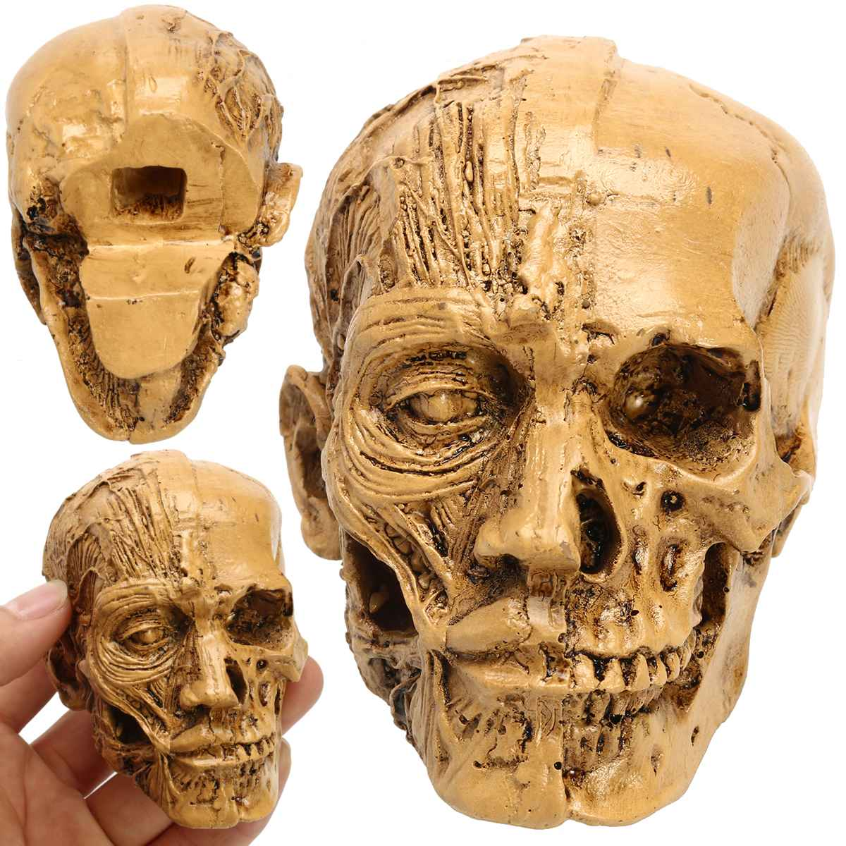 9x5.5cm Human Skull Resin Model Anatomical Medical Teaching Skeleton Head Muscle Bone School Educational Head Skull Bone Model9x5.5cm Human Skull Resin Model Anatomical Medical Teaching Skeleton Head Muscle Bone School Educational Head Skull Bone Model