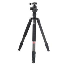 Bexin W284C+H36 Carbon Fiber Professional Travel Camera Tripod