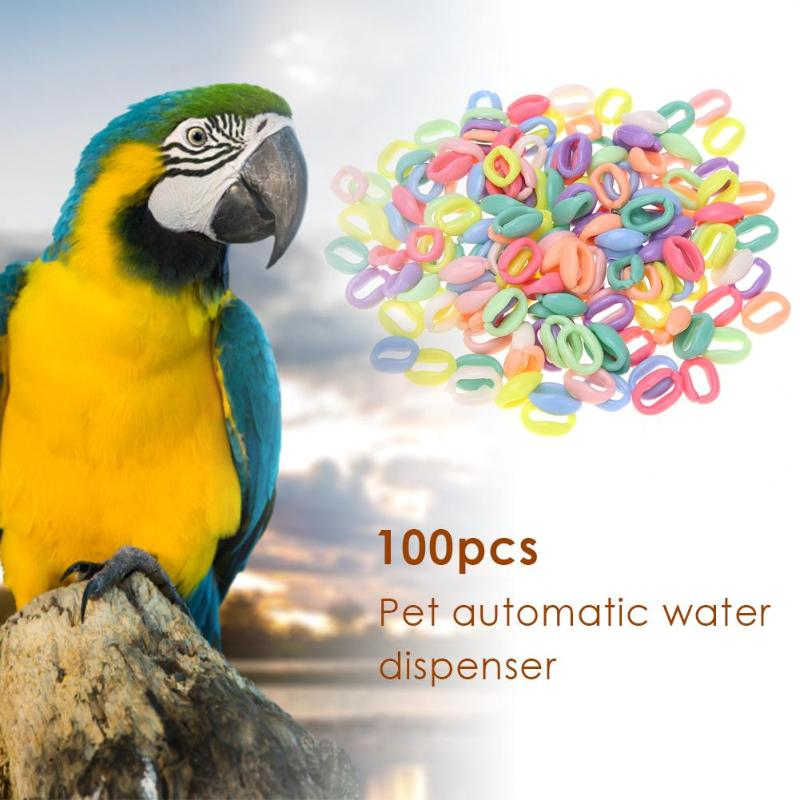 Us 2 52 23 Off 100 Pcs Set Wooden Ring Parrot Toys Bite Chew Play Natural Colorful Rings Decoration Birds Parakeet Toy Diy Accessories In Bird Toys