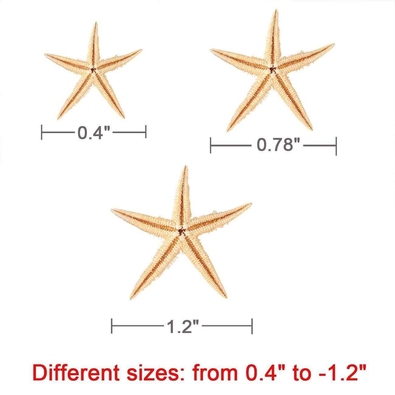קטן כוכב ים כוכב ים פגז חוף קרפט 0.4 אינץ-1.2 אינץ 90 Pcs
