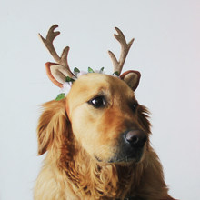 Pet Christmas Antler Reindeer Headdress Headband Dog Cat Pet Cosplay Dress Up Deer Hat Floral Head Bands Dog New Year Costume(China)