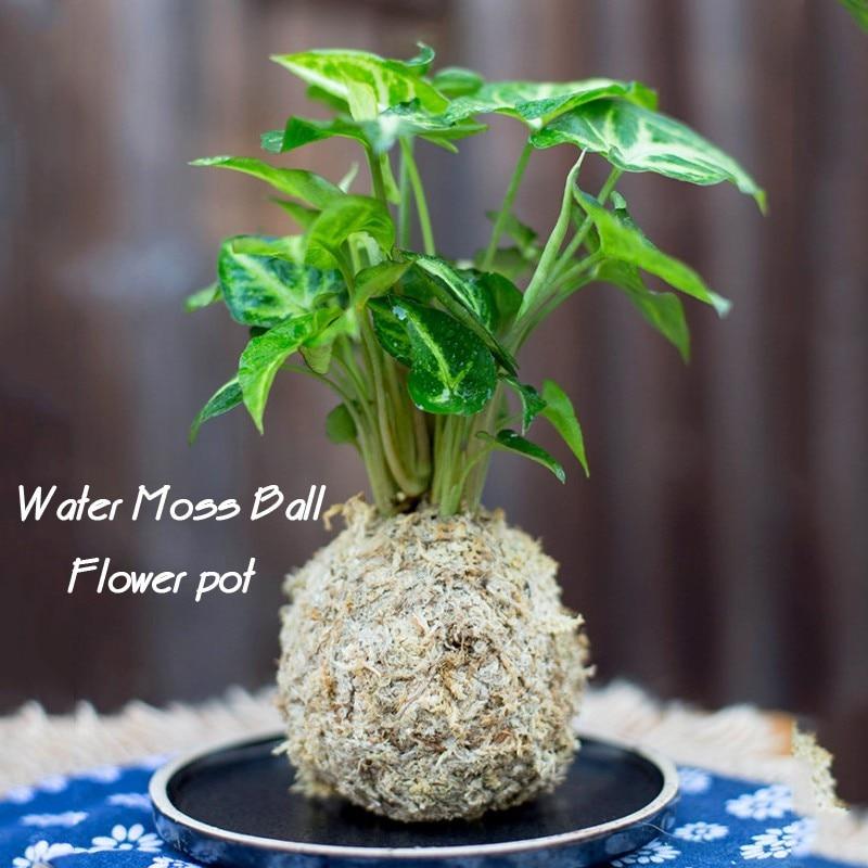 12cm Natural Dry Moss Ball Bonsai Green Sphagnum Moss Planter Ball Flowerpot