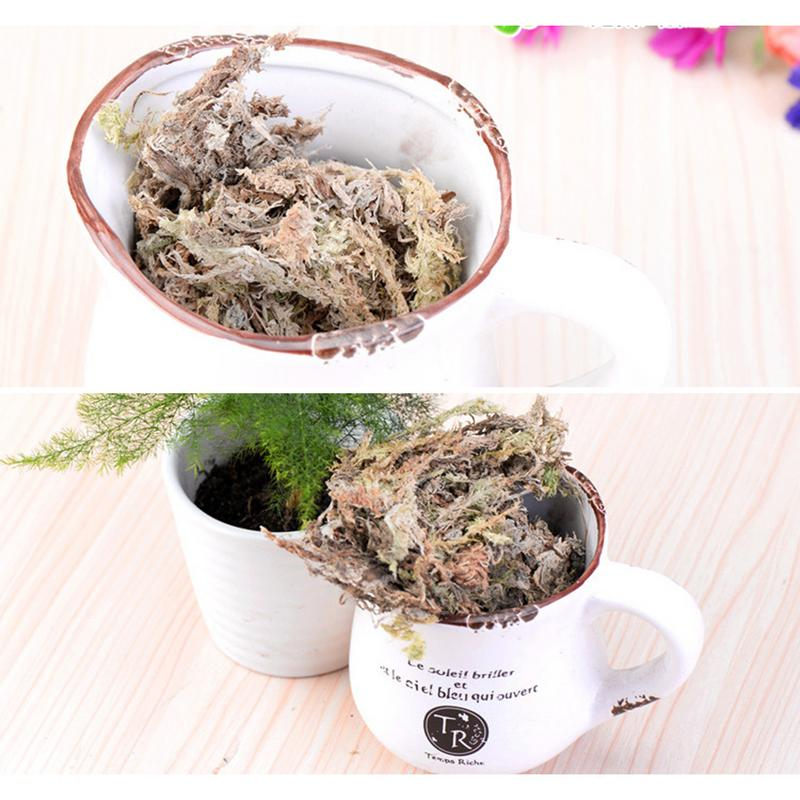 6L Water Moss Water Grass Substrates Nutrition Organic Fertilizer Orchid Phalaenopsis Musgo Sphagnum