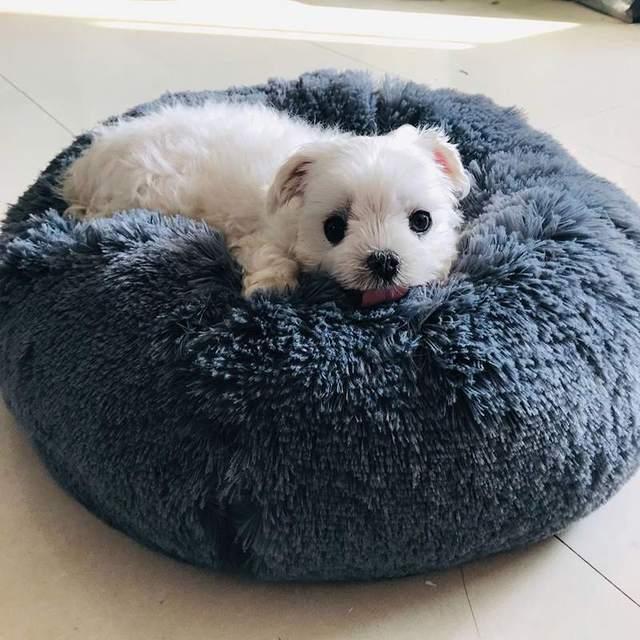 Plush Soft Bed  3