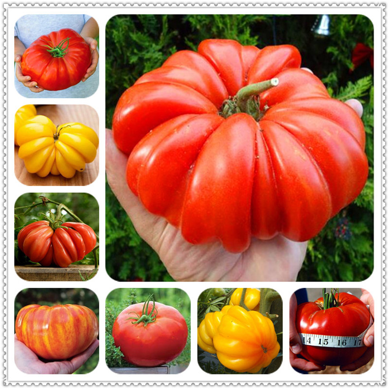 Sale! 200Pcs Giant Tomato Plants Organic Heirloom Plants Vegetables Perennial Non-GMO Plant Pot For Home Garden Planting