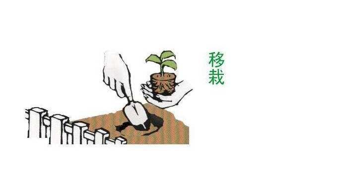 35 * 15 мм 20 грамм/шт * 10 шт. саженцы семена питательные блок вилки для пересадка в саду плантатор питание почвы