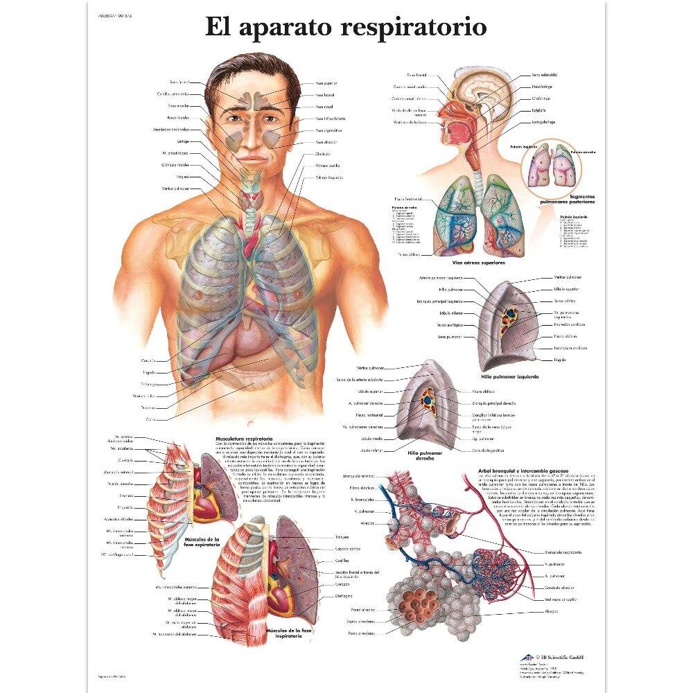 Beste Anatomie Menschlichen Körper Bilder - Anatomie Ideen - finotti ...