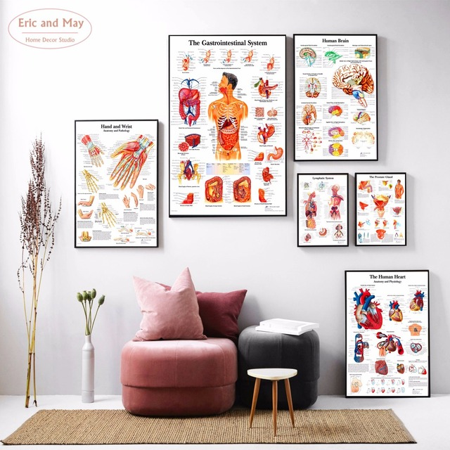Human Body Anatomy Canvas Art Print Painting Poster Wall Pictures