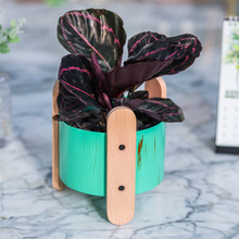 Pastoral Green Metal Iron Flower Pot Home Garden Decoration Planter Plant Succulent Container 3 Wood Legs Wedding Tabletop Gift