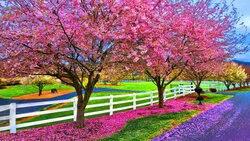 Wiosna ogrodzenia cherry blossoms drzewo park tła wysokiej jakości wydruku komputerowego wall tła stock