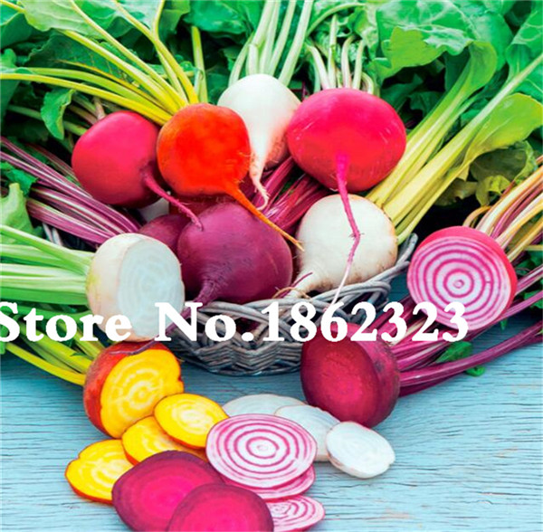 Hard-Working Zlking 200pcs Seaweed Head Red Beet Root Beet And To Have A Long Life.