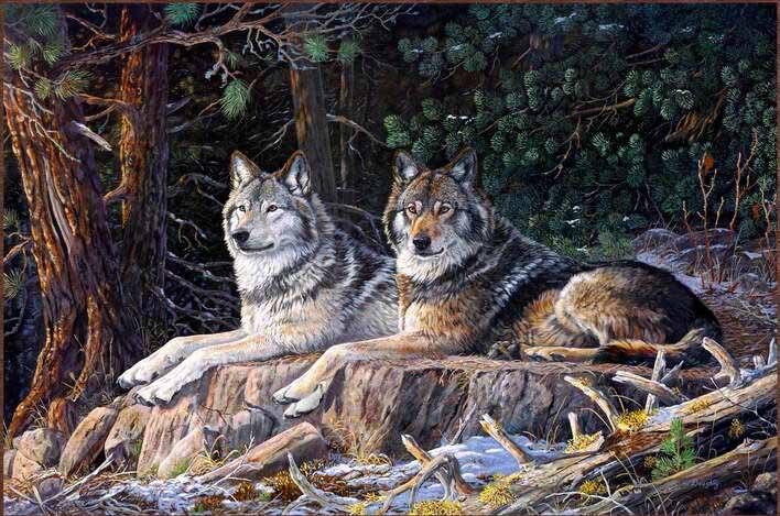 wolf bilder farbe kaufen billigwolf bilder farbe partien. Black Bedroom Furniture Sets. Home Design Ideas