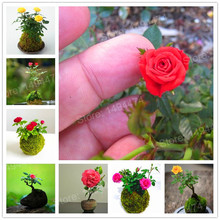 200pcs rare rainbow mini rose seeds Mini Climbing Rose Tree Seeds mini colorful bonsai rose flower seeds for home garden(China)