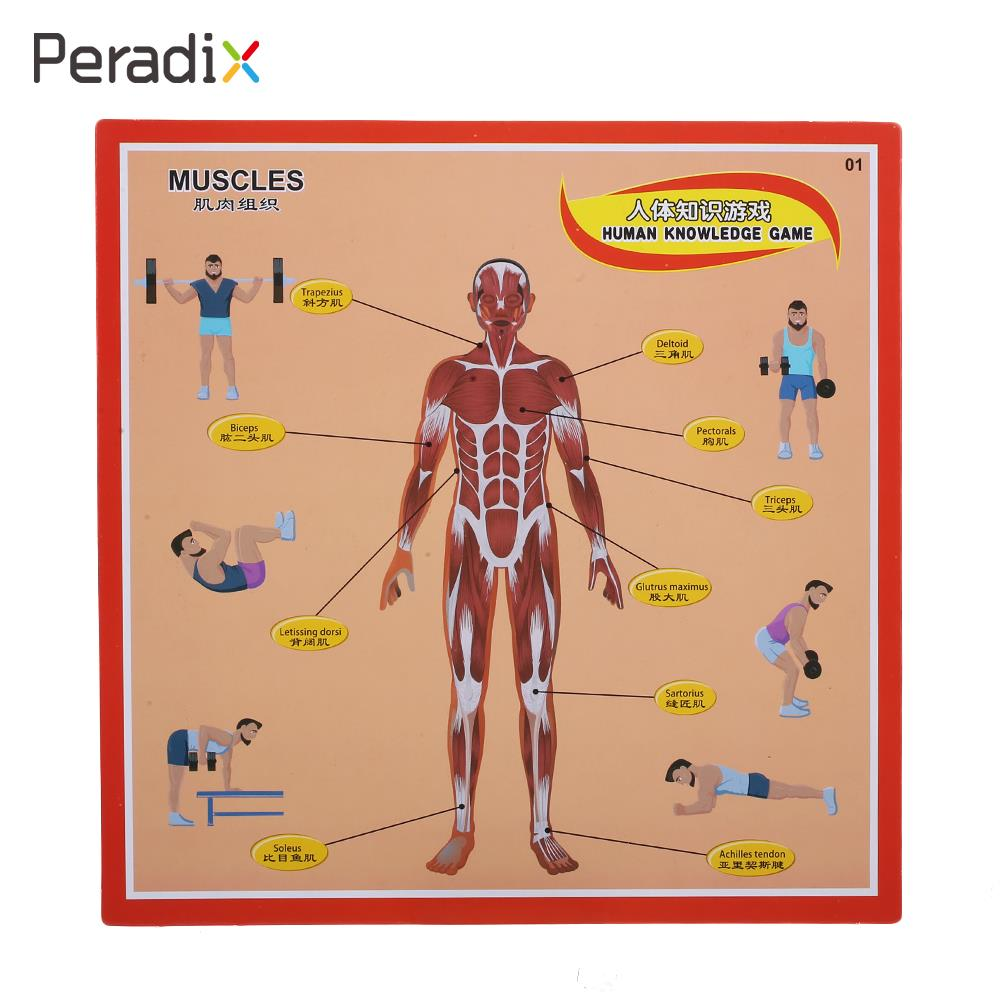 Model Body Board Game Puzzle Educational Intelligent Human Anatomy