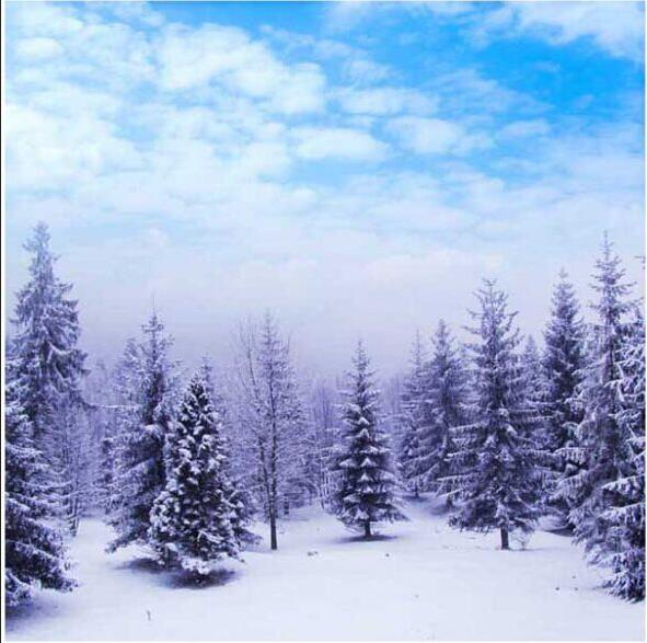 scenic background High quality Computer print Winter Blue Sky White Clouds Snow Woodland Forest Trees Field Ice backdrops