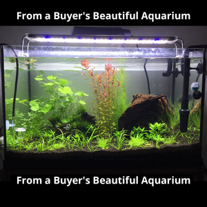 Image 5 - Nicrew Iluminación Led ultradelgada de aleación de aluminio para acuario, iluminación LED de 6500 7500K para acuario, 12W 24W