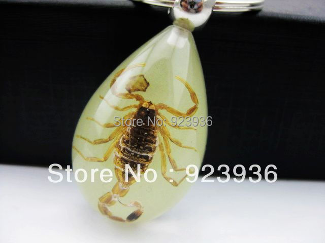 FREE SHIPPING 36 pcs Key Ring Real Insect Specimen Glow Gloden Cool Scorpion Key Chain New