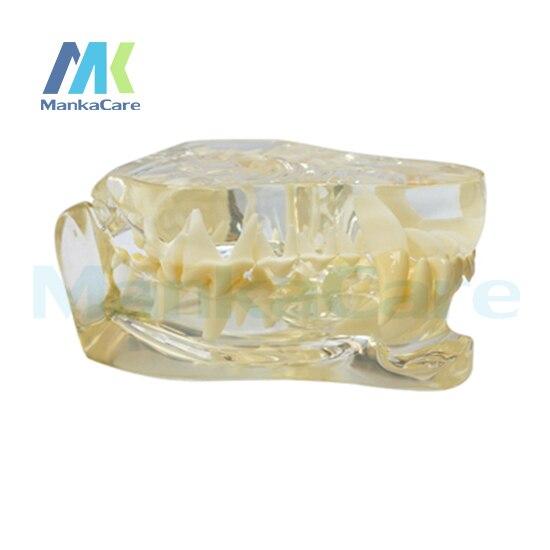 Manka Care - Dog Dentition Model Oral Model Teeth Tooth Model