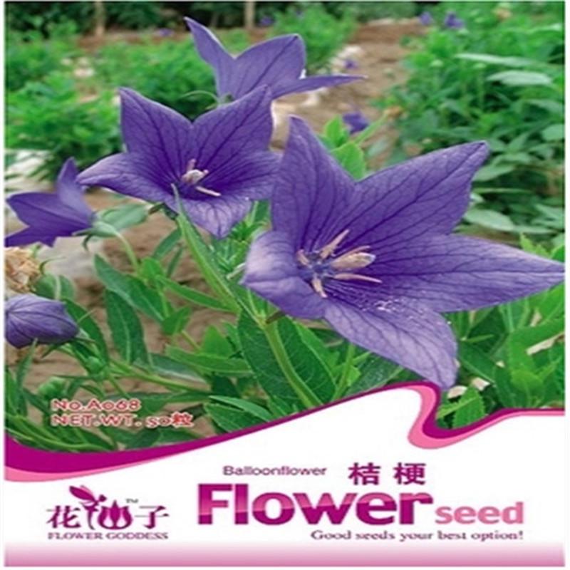 planta en maceta cuatro estaciones flores faery hermoso globo flor semillas siembra fcil tipo de plantas