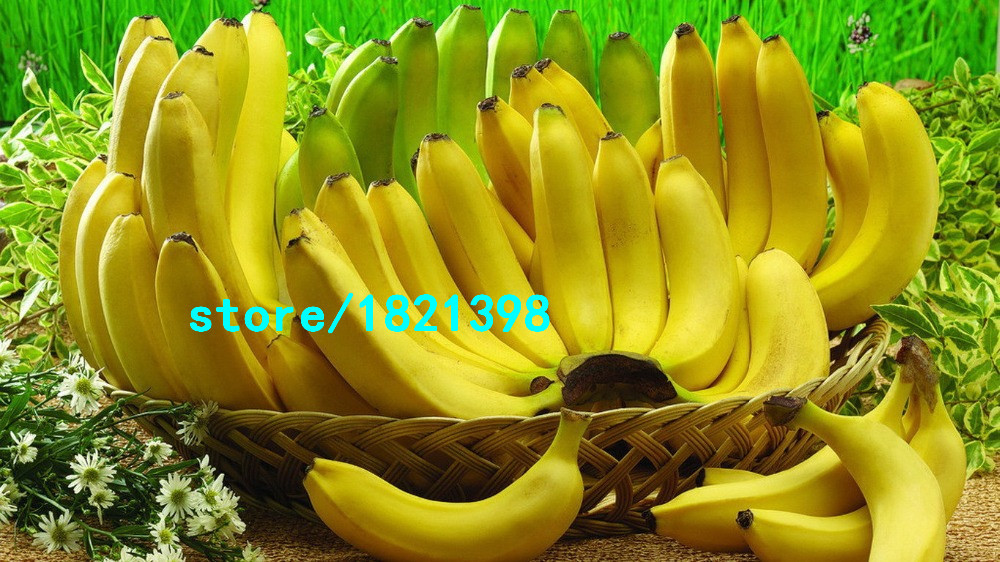 100PCS/Bag Imported Banana Seeds Milk Taste Beautiful Delicious Fruit Seeds
