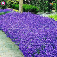 100pcs Rock Cress Seeds Climbing Ground Cover Flower Seeds Perennial Creeper Fall Houseplants for Home Garden Best packaging