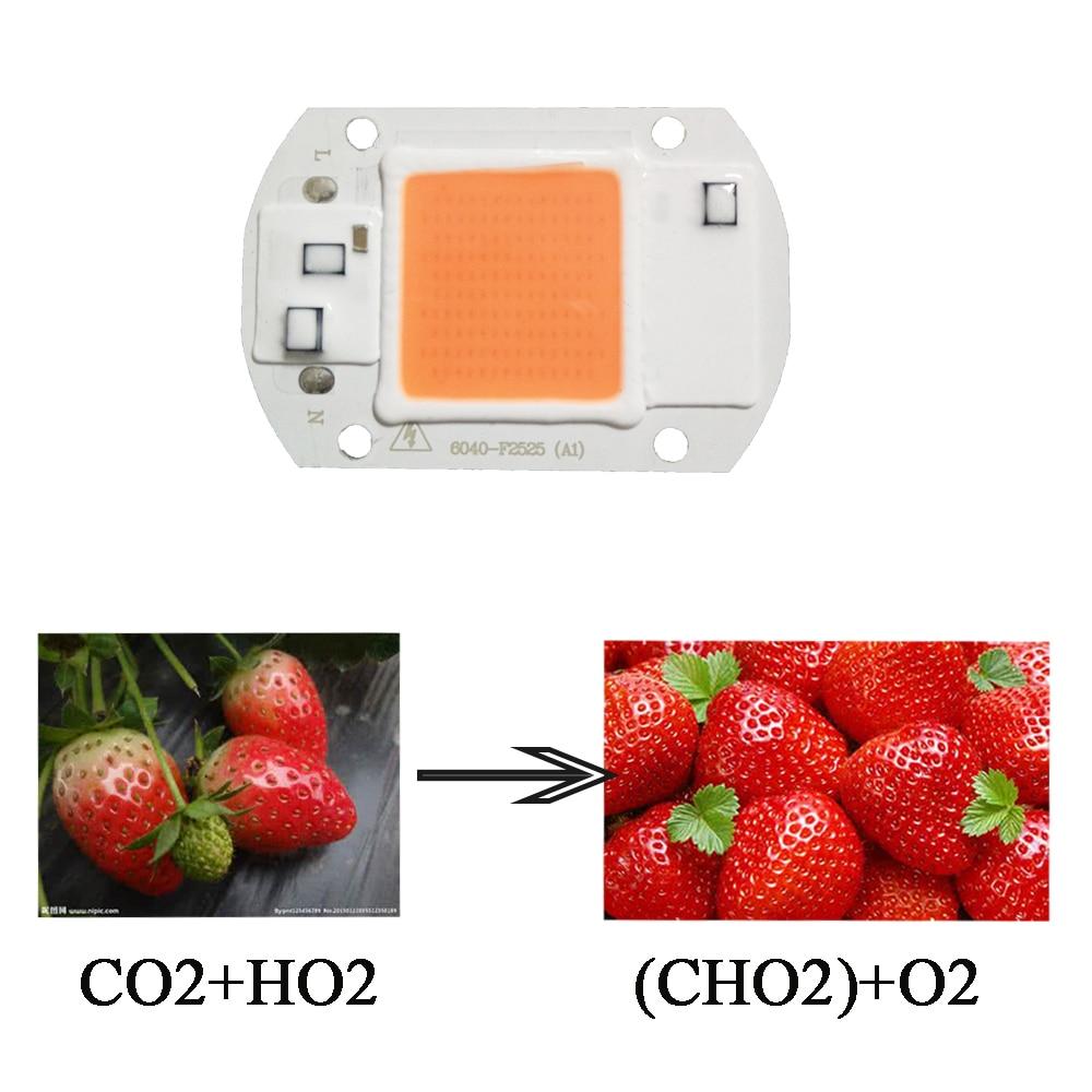 LED เติบโตไฟซังชิป 20 วัตต์ 30 วัตต์ 50 วัตต์ Phytolamp เต็มสเปกตรัมสำหรับในร่มไฮโดรโปนิพืชต้นกล้าเติบโตและพิพิธภัณฑ์สัตว์น้ำดอกไม้