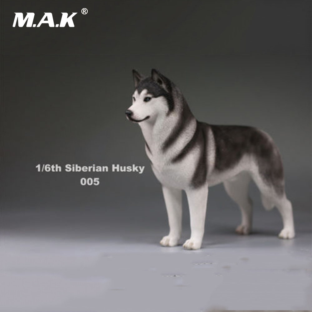 1:6 Scale Pet Dog Model Action Figure Accessory Siberian Husky Simulation Animals Model Toys for 12'' Action Figure creative sled dog bulldog model pinata toys pet dog piggy bank bull terrier akita dogs siberian husky dogs save money tank model
