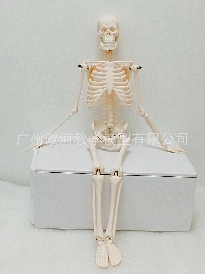 45CM Mini Human Anatomy Skeleton Model Medical Standard For Fine Arts And Medicine Stand Poster Medical Learn Aid Biology