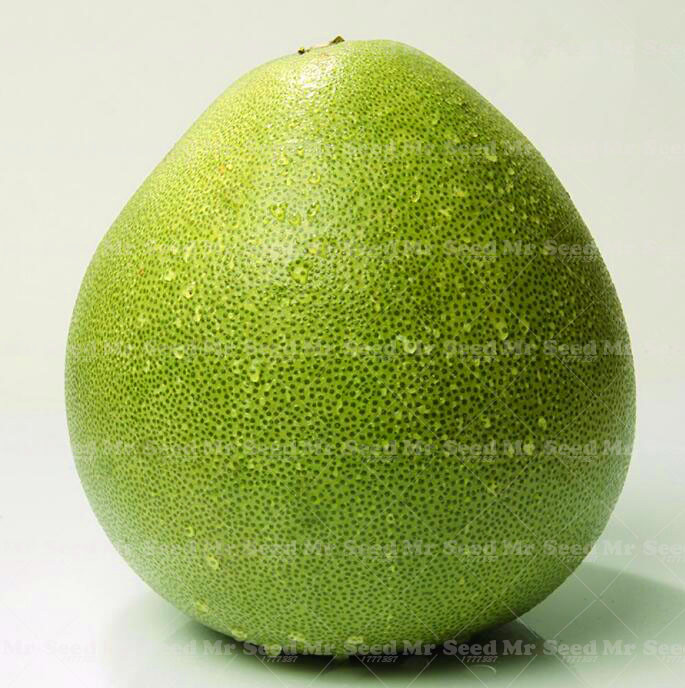 Thailand Fruit Wholesaler Email Mail: Online Buy Wholesale Pomelo Tree From China Pomelo Tree