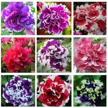 free ship Garden Petunia petals flower seeds for garden petunia semillas de petunias, 40 seeds