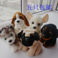 Dog husky ,Chihuahua ,dog plush toy doll one set / 5 pieces as picture child gift