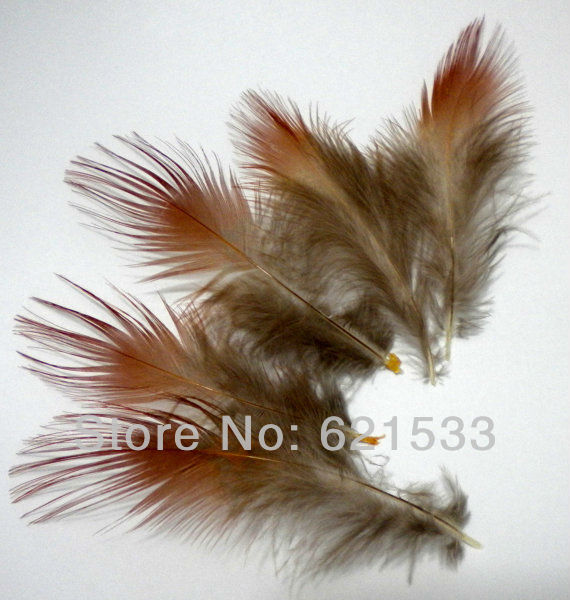 200Pcs Lot 4 8cm Rusty Red Golden Pheasant Plumage Feathers for fascinators bridal wear crafts in Feather from Home Garden