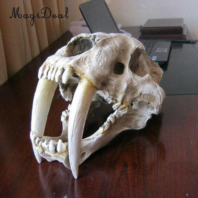 eaafa6e01 1:1 Saber-Tooth Tiger Resin Skull Replica Collection Head Model Home Decor  White