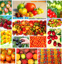 Promotion! 500pcs 11kinds Tomato seeds different color flavors Fruit Vegetable Bonsai Zebra TOMATO SEEDS Purple Cherry