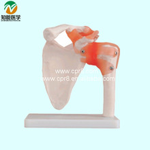 Life-Size Shoulder Joint Model With Ligaments BIX-A1016 WBW361