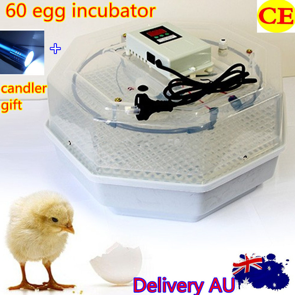 Best Price Incubator 60 Eggs Incubator Chicken Duck Poultry Incubator Machine For Sale fantasy big mushroom 10 x20 cp computer painted scenic photography background photo studio backdrop dt lp 0067