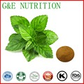 Kosher Natural Peppermint Extract Mint Herb Powder Menthol  300g