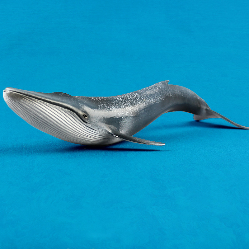 3pcs Realistic Small Baby Beluga Model White Whale Sea Life Static Solid Animal Figures Children Underwater World Cognitive Toys Toys & Hobbies