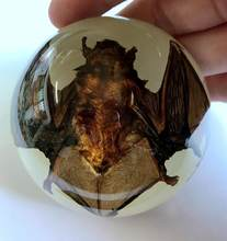 FREE SHIPPING Vintage Glow In Dark base real dead bat in lucite dome Yqtdmy Specimen Crafts(China)