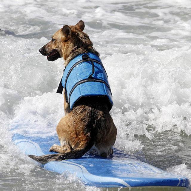 xl dog life jacket