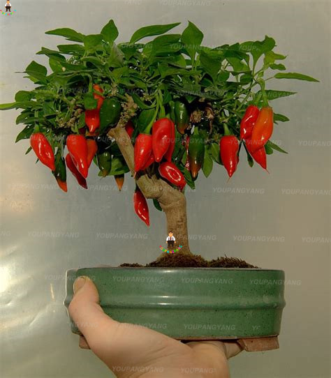 100PCS Red Fresh Carolina Reaper Chilli Pepper Planting bonsais Super Hot chili bonsai plants home garden Decoration Vegetable