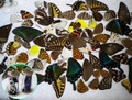 20 шт. реальные крылья бабочки, 3D Бабочки образцов крылья, Настоящее Сушеные Moth бабочки крылья для кольца/серьги/ожерелье