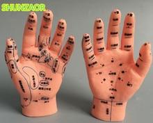 יד דיקור דגם 15 CM עם יד ימין ושמאל