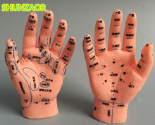 Hand Acupunctuur Model 15 Cm Met Rechter en Linkerhand