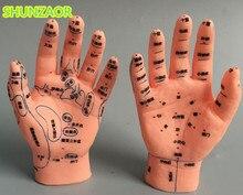 Modèle dacupuncture à la main 15 CM avec main droite et main gauche