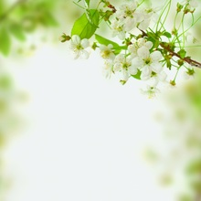 Laeacco Flowers Green Leaves Baby Newborn Wedding Photography Backgrounds Customized Photographic Backdrops For Photo Studio